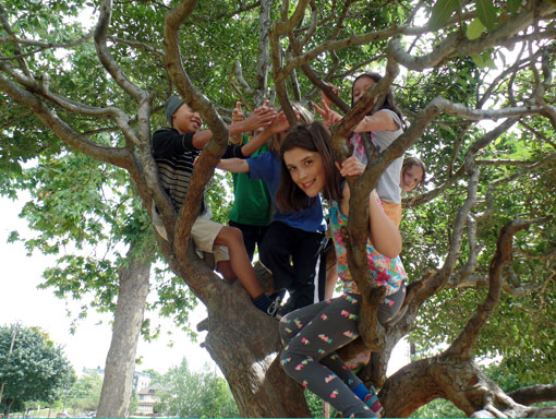 Summer Camp Students in a Tree